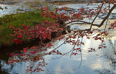Indiana Photograph - Red Leaves In Falls Park Creek by Amy Lucid