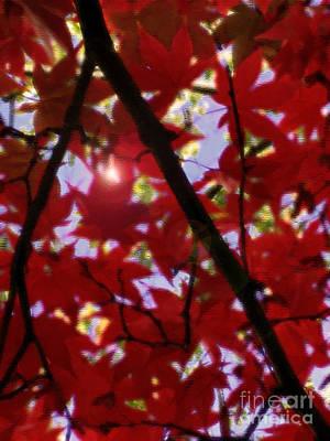 Digital Art - Red Leaves In Light by Haleh Mahbod