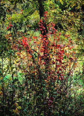 Photograph - Red Leaves by John Brink