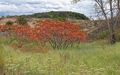 Photograph - Red Leaves On Grassy Dunes by John M Bailey