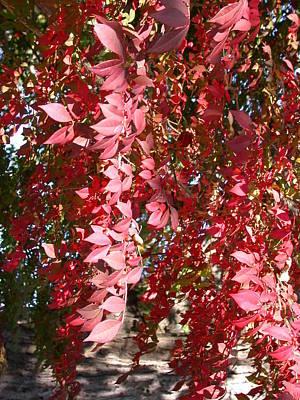 Red Leaves Art Print by Susan Boyes