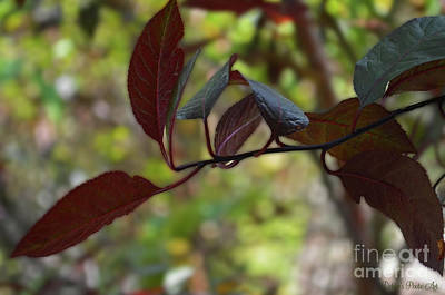 Photograph - Red Leaves With Bokeh by Debbie Portwood