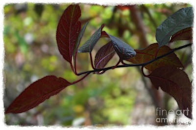 Photograph - Red Leaves With Frame by Debbie Portwood