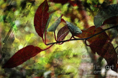 Photograph - Red Leaves With Texture by Debbie Portwood