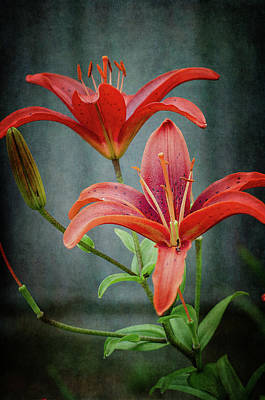 Photograph - Red Lilies by Susan McMenamin