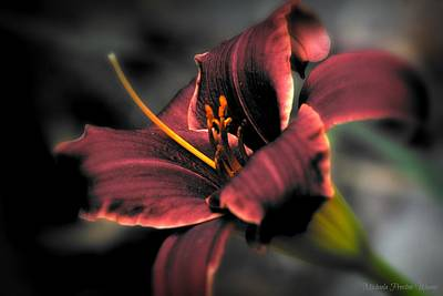 Photograph - Red Lilly2 by Michaela Preston