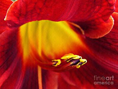 Photograph - Red Lily Center 4 by Sarah Loft