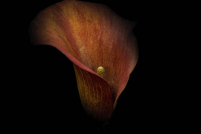 Print featuring the photograph Red Lily by Ryan Photography