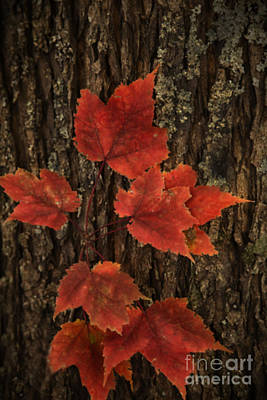 Photograph - Red by Linda Blair