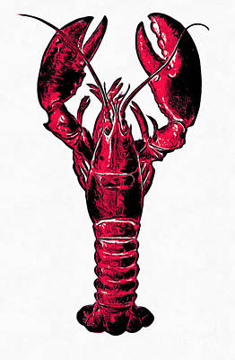 Maine Coast Drawing - Red Lobster by Edward Fielding