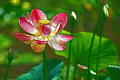 Red Lotus Flower Blossom Art Print by Lanjee Chee