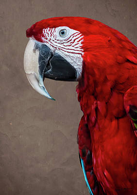 Mark Myhaver Royalty Free Images - Red Macaw Royalty-Free Image by Mark Myhaver