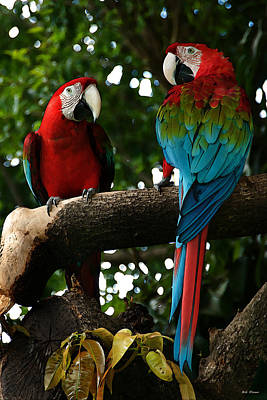 Red Macaws Art Print