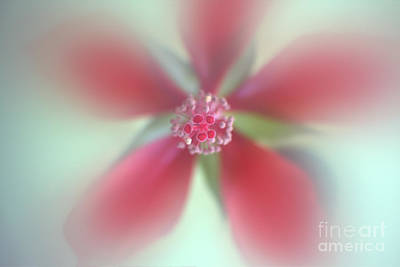 Photograph - Red Macro Floral Art by Ella Kaye Dickey