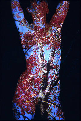 Red Maple Art Print by Arla Patch