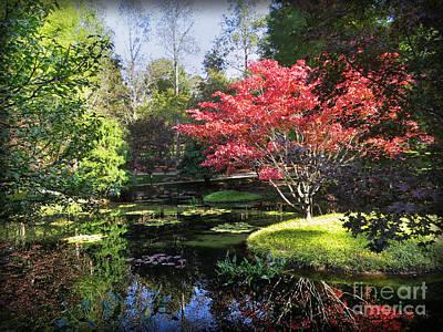 Photograph - Red Maple by Dawn Gari