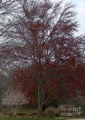 Red Maple Art Print by Emily Kelley