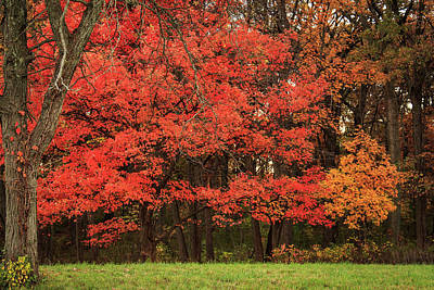 Photograph - Red Maple Fall Display by Joni Eskridge