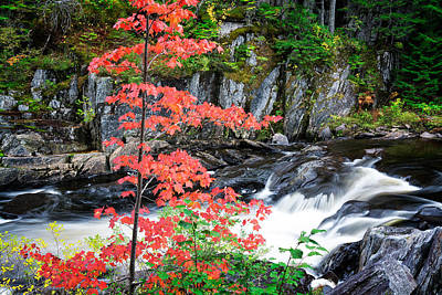 Photograph - Red Maple Gulf Hagas Me. by Michael Hubley
