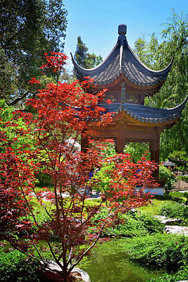 Chinese Red Maple Tree Photograph - Red Maple And Pagoda In The Chinese Garden by Lynn Bauer