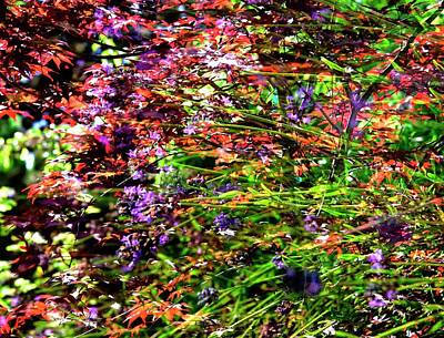 Photograph - Red Maple Lavendar by Jerry Sodorff