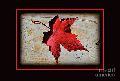 Photograph - Red Maple Leaf With Red Border by Karen Adams