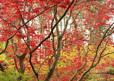 Gardens Photograph - Red Maple Leaves And Branches by Carol Groenen