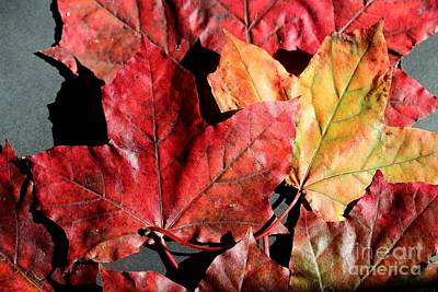 Art Print featuring the photograph Red Maple Leaves Digital Painting by Barbara Griffin
