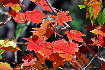 Photograph - Red Maple Leaves by Kay Lovingood