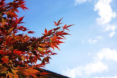 Red Maple Leaves Original