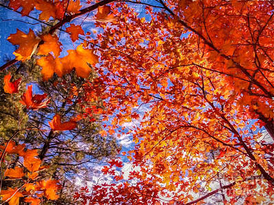Photograph - Red Maple Sky by Marianne Jensen