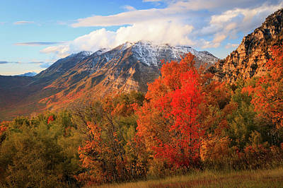 Photograph - Red Maple With Timp by Johnny Adolphson