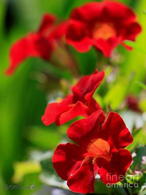 Photograph - Red Mimulus From The Magic Rainbow Mix by J McCombie
