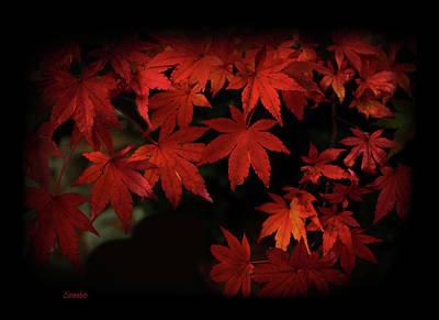 Photograph - Red  Momiji by Eena Bo