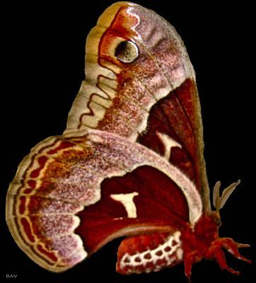Red Moth Art Print