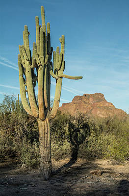 Photograph - Red Mountain And Saguaro Shadow 2439-032118-cr by Tam Ryan