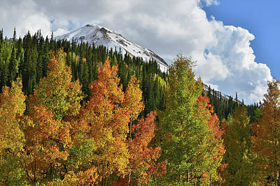Photograph - Red Mountain's Multicolored Aspens by Ray Mathis