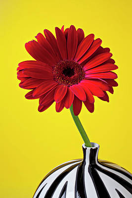 Red Mum Against Yellow Background Art Print by Garry Gay