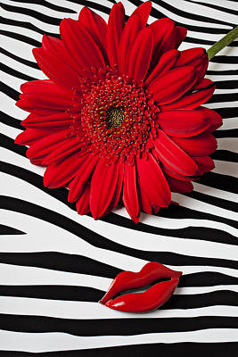 Gerbera Photograph - Red Mum And Red Lips by Garry Gay