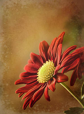 Photograph - Red Mum by Teresa Wilson
