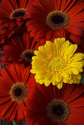 Gerbera Daisy Photograph - Red Mums And Yellow Daisy by Garry Gay