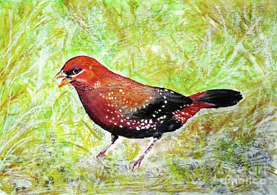 Red Munia Art Print