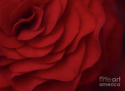 Photograph - Red  by Natalie Dowty