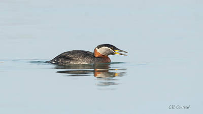 Photograph - Red-necked Grebe by CR Courson