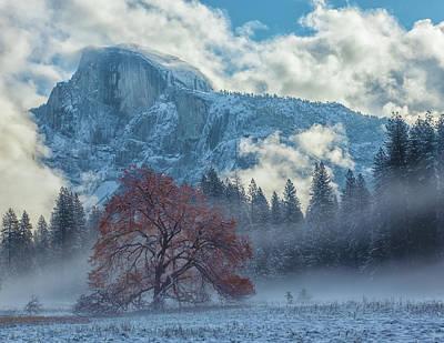 Photograph - Red Oak by Jonathan Nguyen