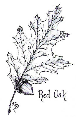 Drawing - Red Oak Leaf And Acorn by Nicole Angell