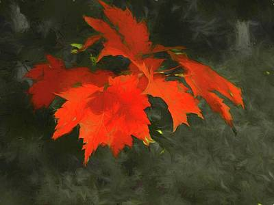 Digital Art - Red Leaf Cluster. by Rusty R Smith