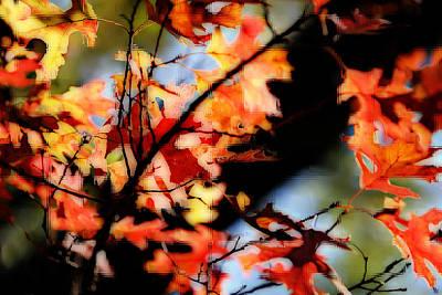Red Oak Leaves In Fall Art Print by Linda Phelps