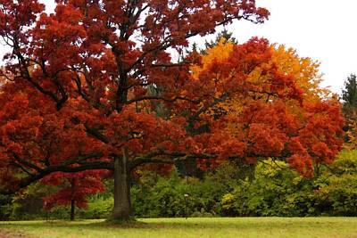 Mighty Oak Photograph - Red Oak by Lyle Hatch