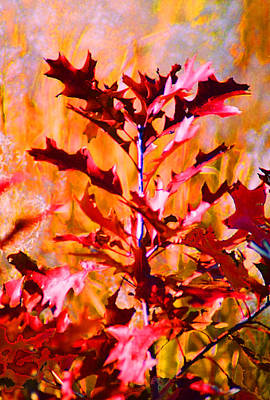 Digital Art - Red Oak by Steve Karol
